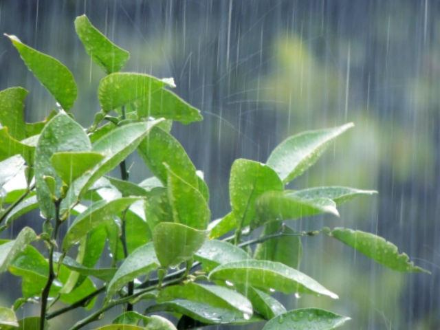 塗装期間中の雨について 豊田市 外壁塗装・屋根塗装専門ペイントスタジオ